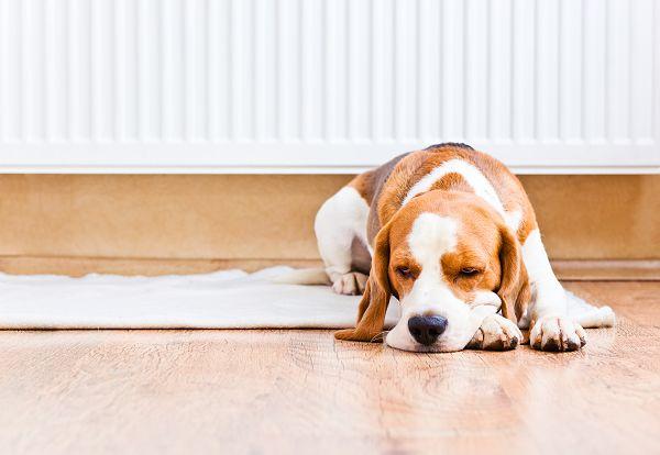 hovorí sa, že podlahové kúrenie je škodlivé pre ľudí a dokonca aj pre zvieratá a kvety. Nie je to pravda. Naopak. Podlahové kúrenie má preukázateľné blahodárne účinky aj na naše zdravie.